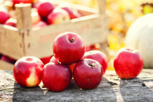 Red group of apples form autumn golden harvest